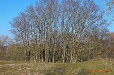 Waterleidingduinen, bomen die gekapt worden