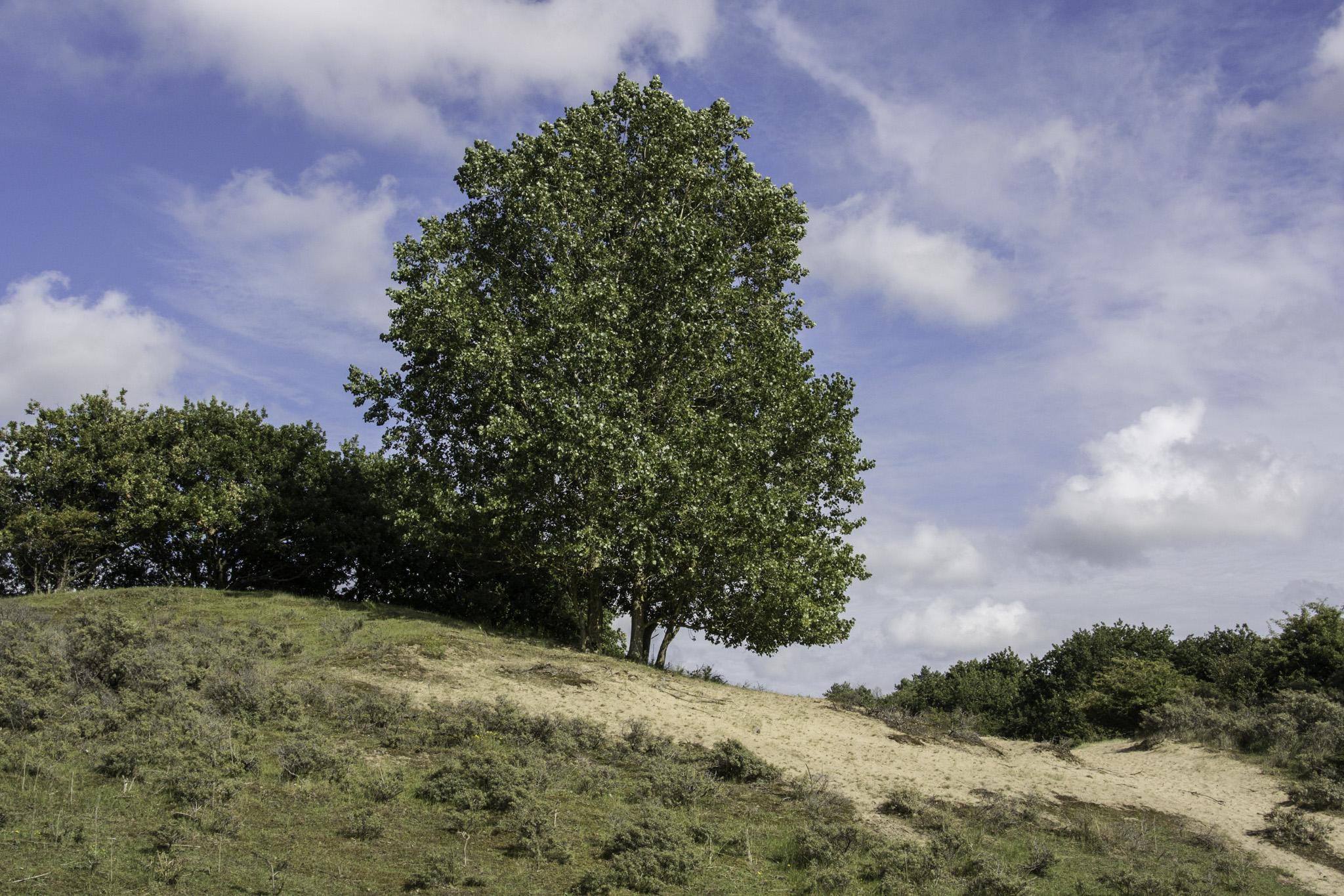 bomenkap waterleidingduinen
