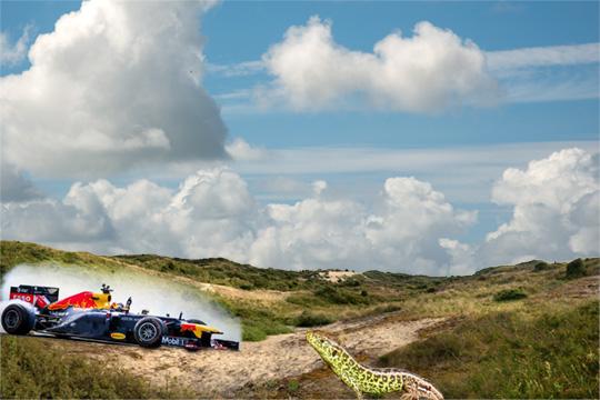 circuit race en zandhagedis