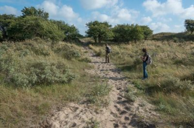 illegaal aangelegd ruiterpad de lus in de Waterleidingduinen